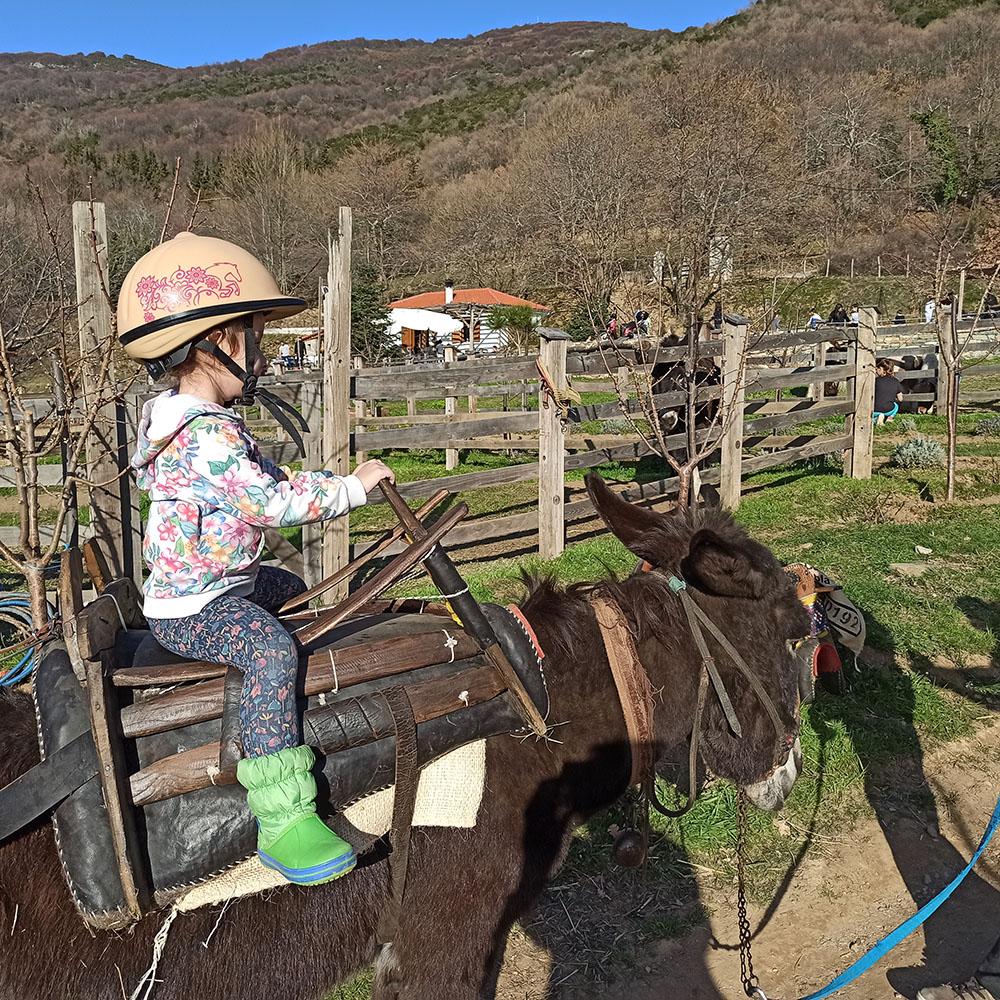 karaiskos farm donkey ride poney ride horses for kids pelion activities