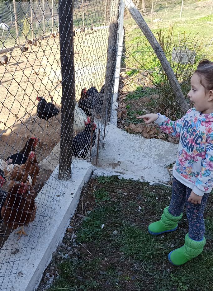 portaria greece karaiskos farm chiken fresh eggs