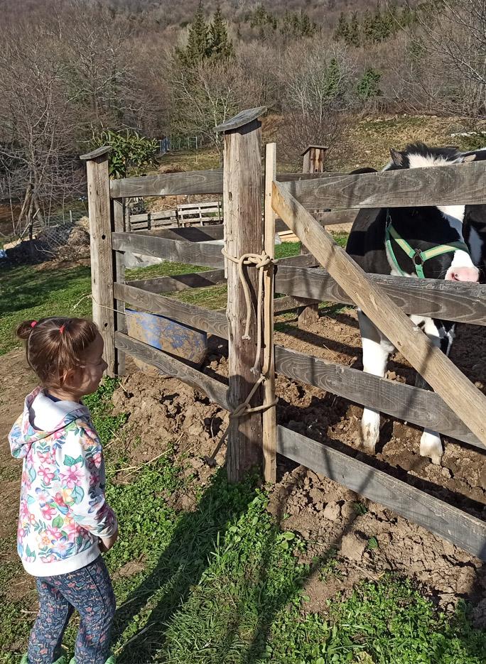 portaria greece karaiskos farm cow fresh milk